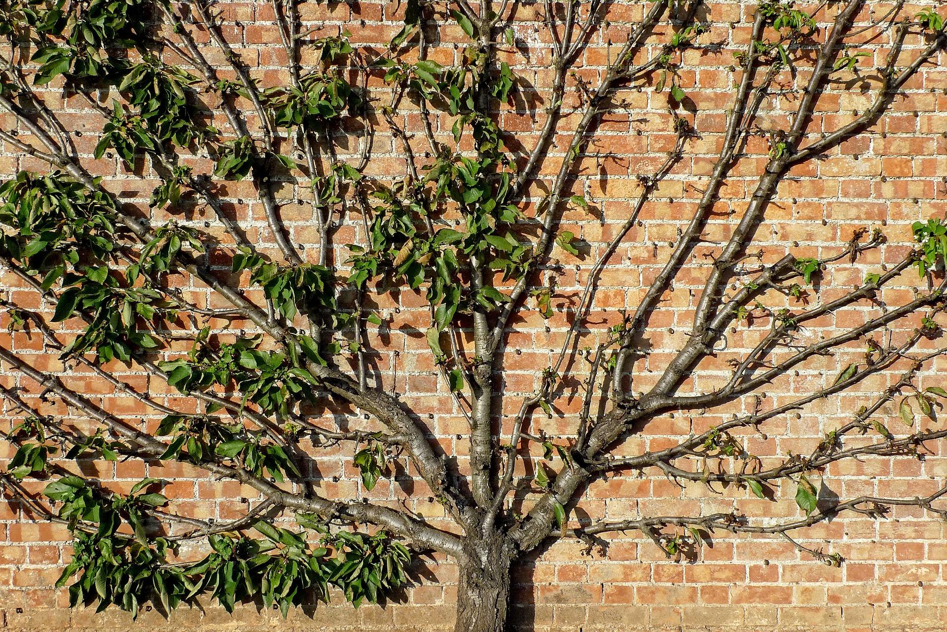 tree-1706648_1920