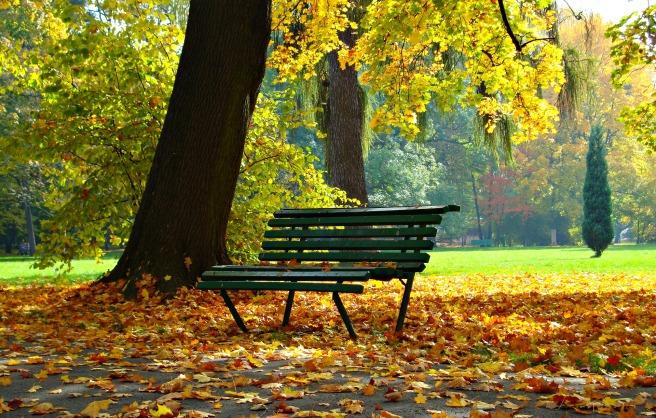 autumn-1877749_1920.jpg